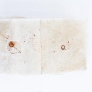 Nature Book by Diana Weymar